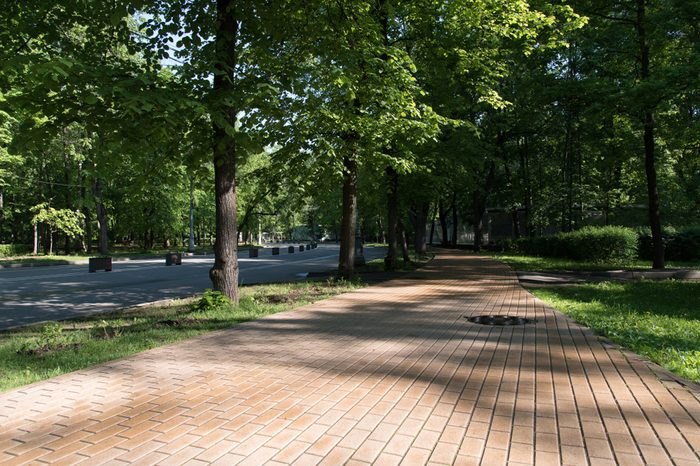 Beautiful urban alley with green trees in the park in the morning sun in the summer