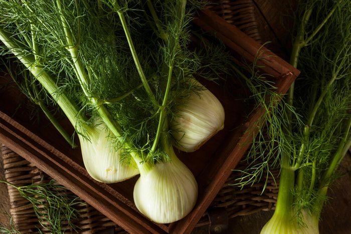 Raw Organic Fennel Bulbs Ready to Cook