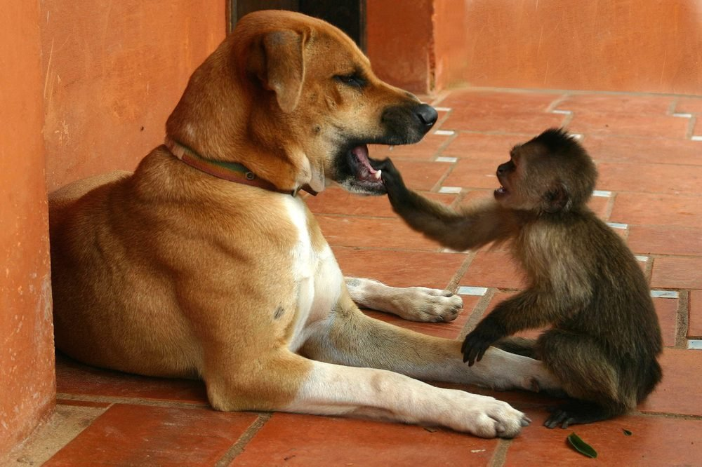 Dog and monkey, animal friends