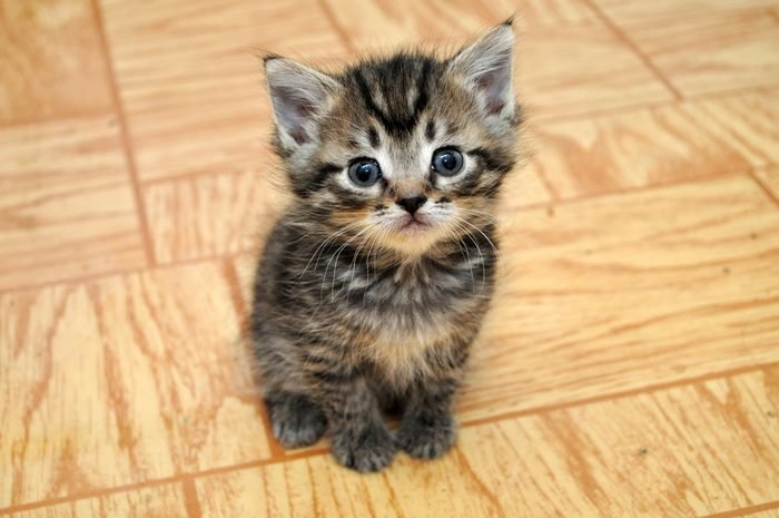 a cute small kitten looking at the camera sitting in a hallway