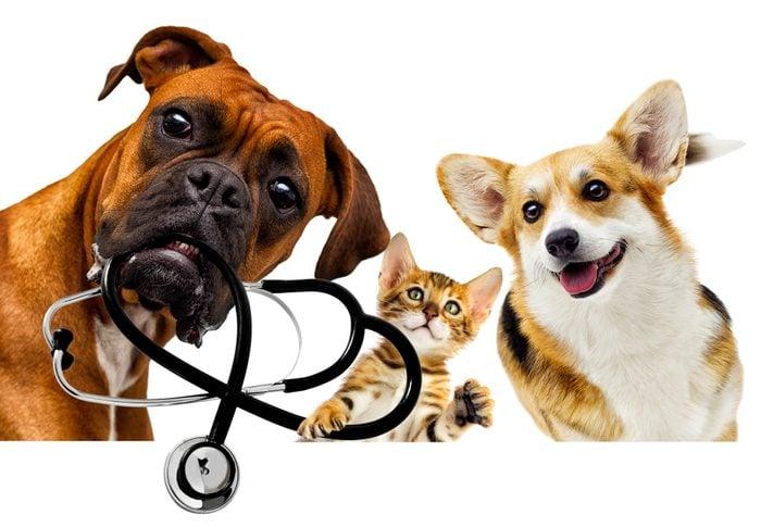vet dog and cat