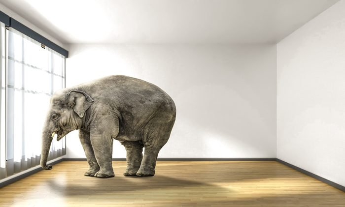 lonely elephant in room