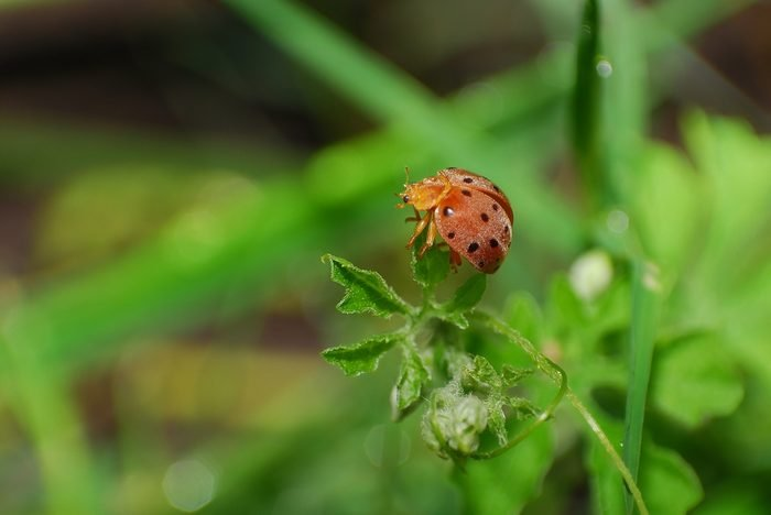 Orange Bug