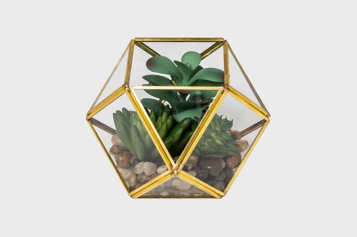 artificial nature terrarium