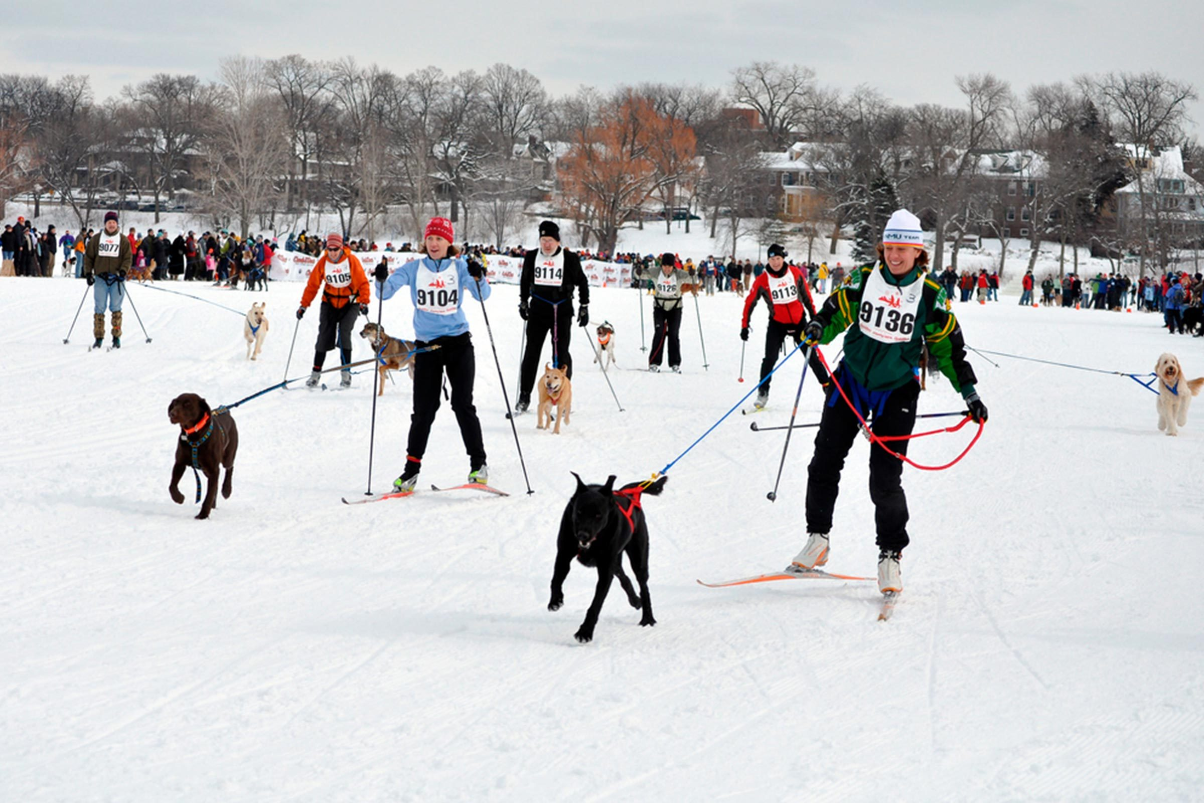 Minnesota skiing with dogs