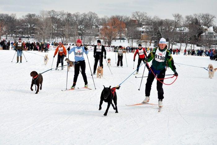Minnesota skiing with dogs