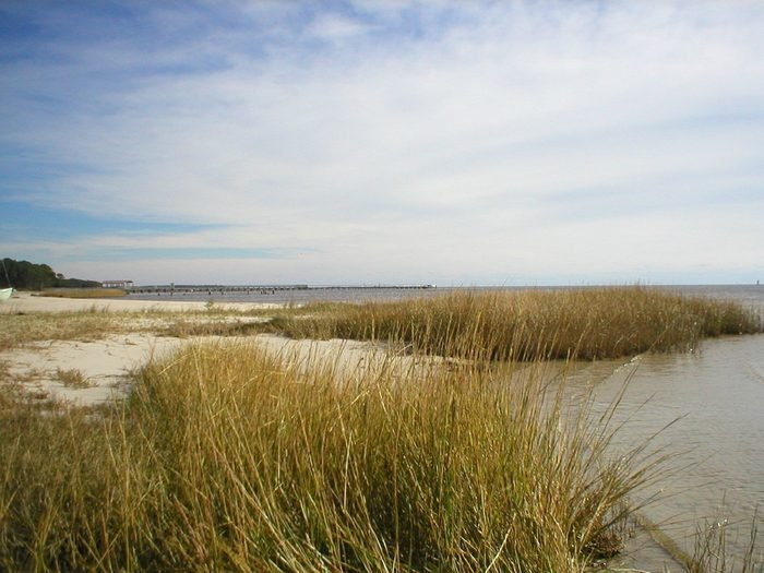 Seagrass at the beach at Ocean Springs, Mississippi
