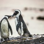 15 Penguin Pictures That Will Absolutely Melt Your Heart
