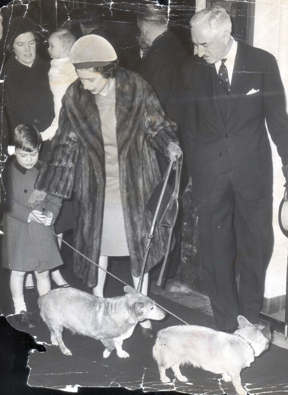 royal family christmas photo with corgi dogs