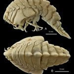 9 New Species of Animals You Didn't Know Existed