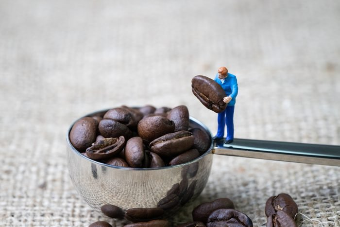 Coffee beans business expert or professional concept, miniature people figurine staff holding roasted coffee bean on spoon with full of beans on gunny bag, selecting best quality.