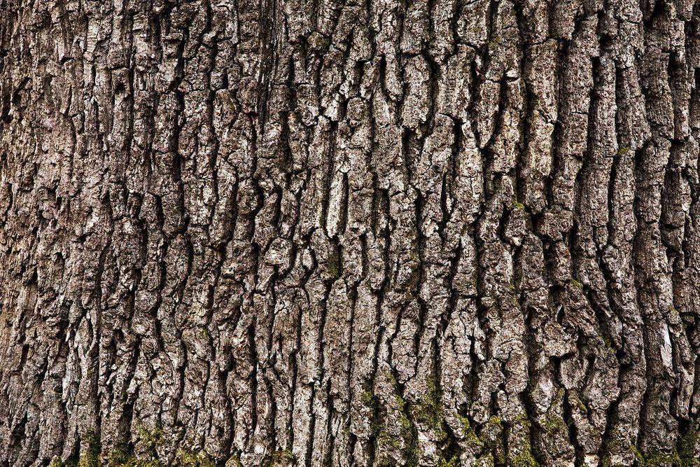 Tree bark texture