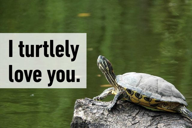 I turtlely love you.