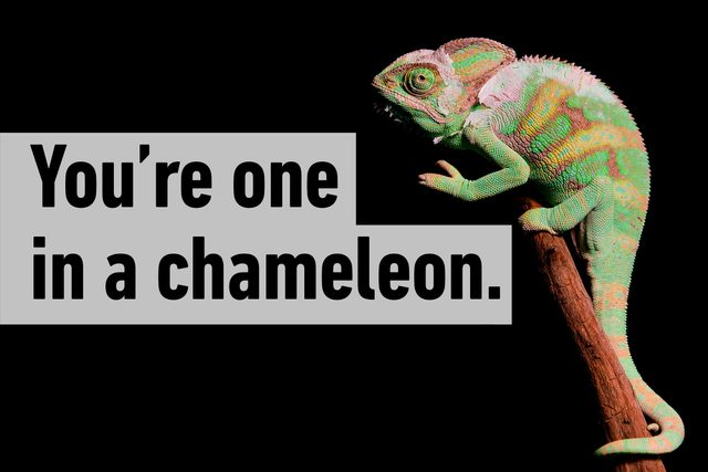 You're one in chameleon.