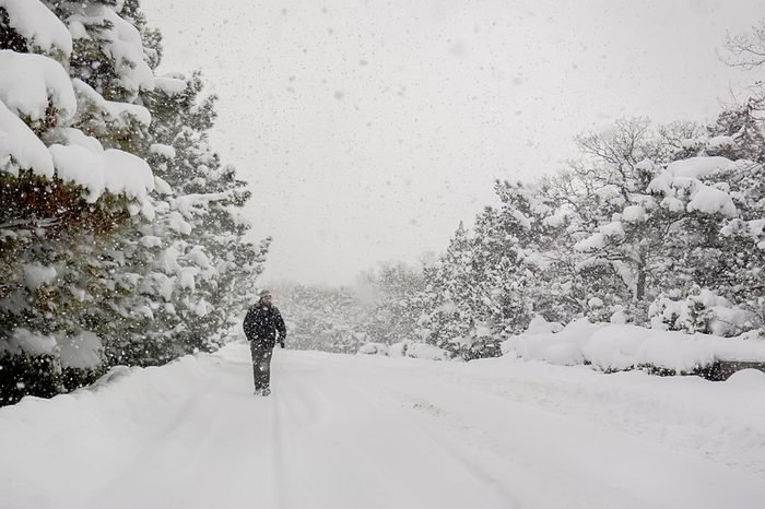 Blizzard, strong snowstorm, snow-covered trees. A silhouette lone man walking along a forest road under the winter snowstorm