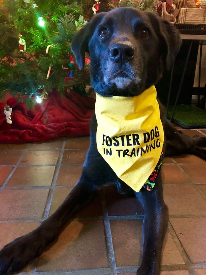 Dogs for Adoption: Dogs Who Will Need a Home in 2019
