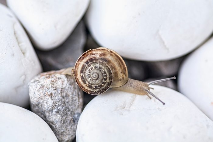 Snail on the white stones in the garden. Macro close-up.