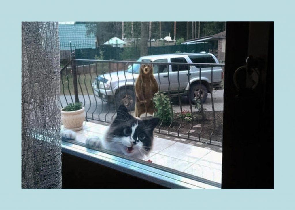 Bear looking at cat