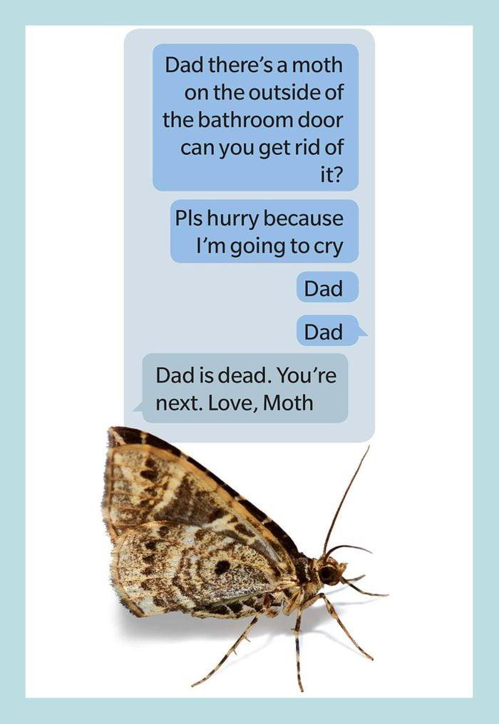 Moth Dad Joke