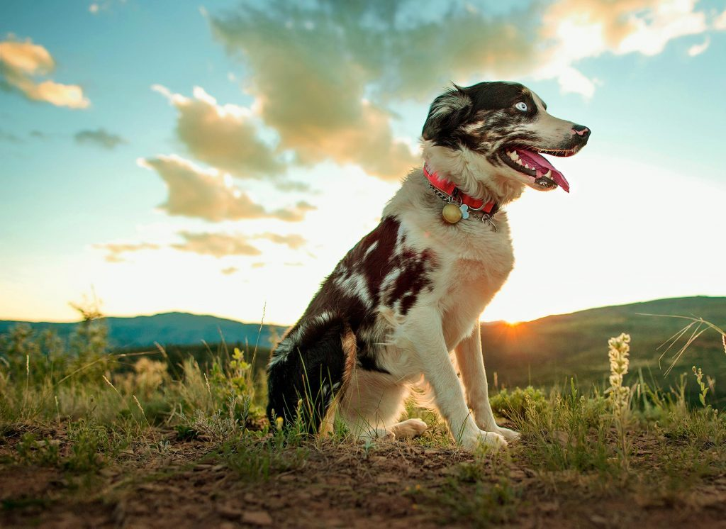 On a run in the Rocky Mountains, the author's dog, Merle, fell 800 feet.