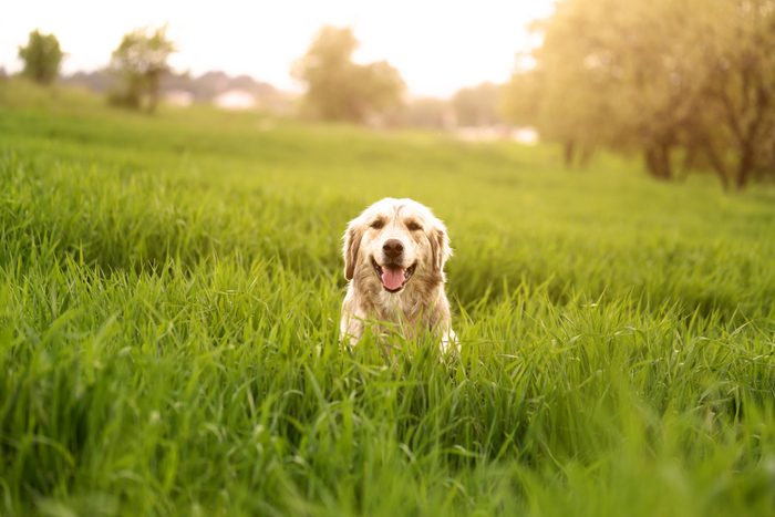 derelict dog in the field