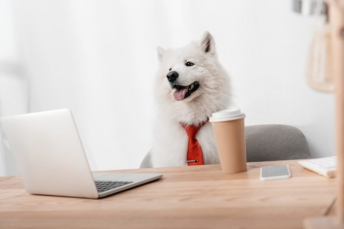 business dog in red necktie working with laptop in office