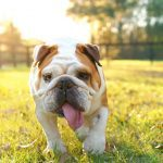 Why Do Dogs Pant? 9 Reasons Your Dog Is Panting