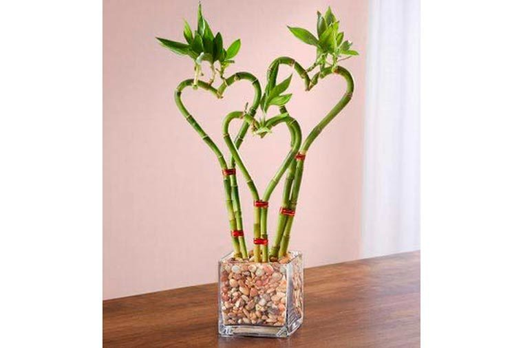 heart shaped bamboo in glass planter