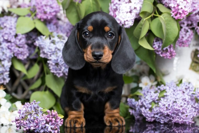 Cutest Dog Breeds as Puppies | Reader's Digest