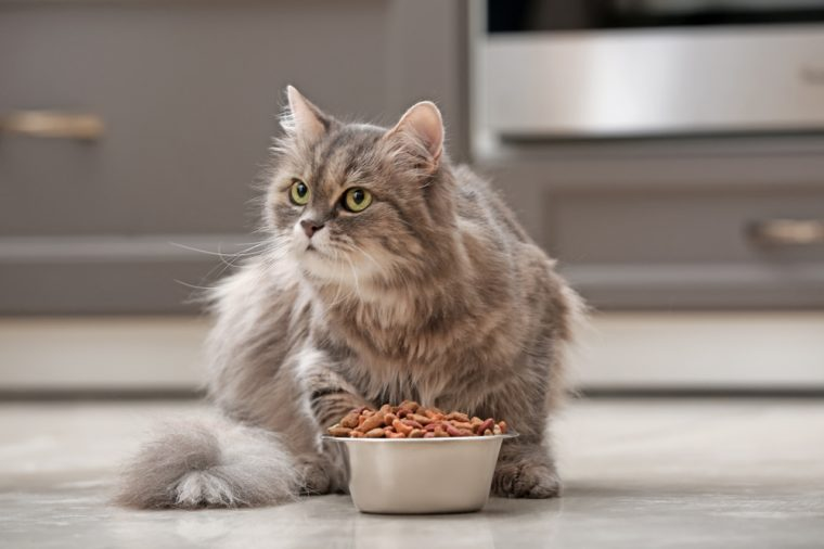 Cute cat near bowl with food at home