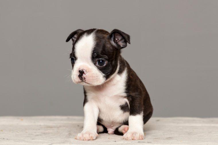 Cutest Dog Breeds as Puppies | Reader's Digest