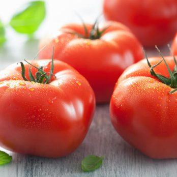 Harvesting Organic Tomato Basics