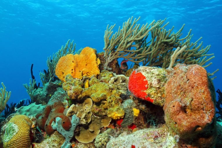 Corals against Surface, Cozumel, Mexico