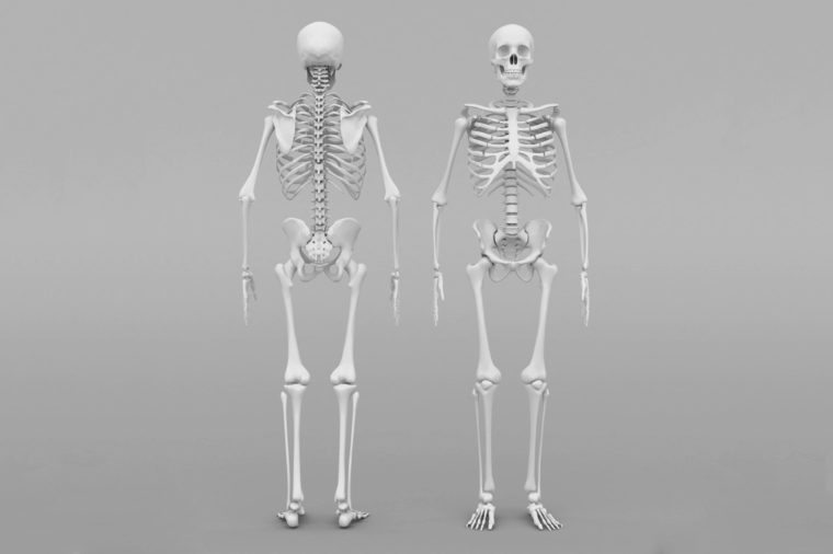 skeleton model on gray background