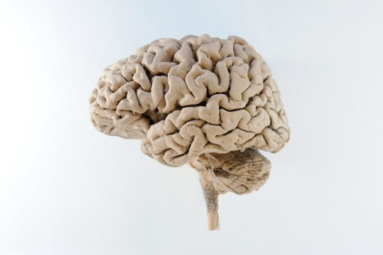 Lateral left of human brain
