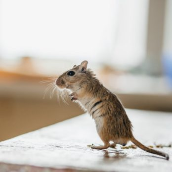 Here's How to Keep Mice out of Your Kitchen