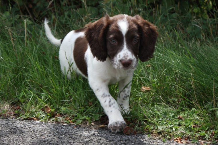 Cutest Dog Breeds As Puppies Readers Digest