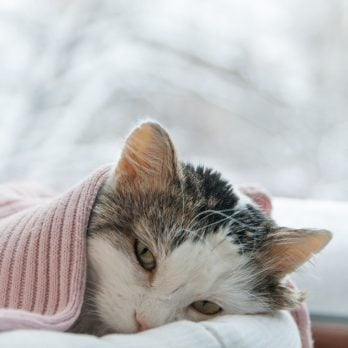 "13 Silent Signs Your ""Healthy"" Cat Is Actually Sick"