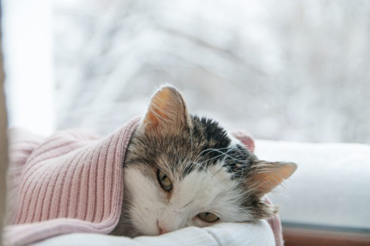 Silent Signs Cat Is Sick (Even If It Seems Healthy