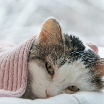 Why Your House Could Be Making Your Cat Sick