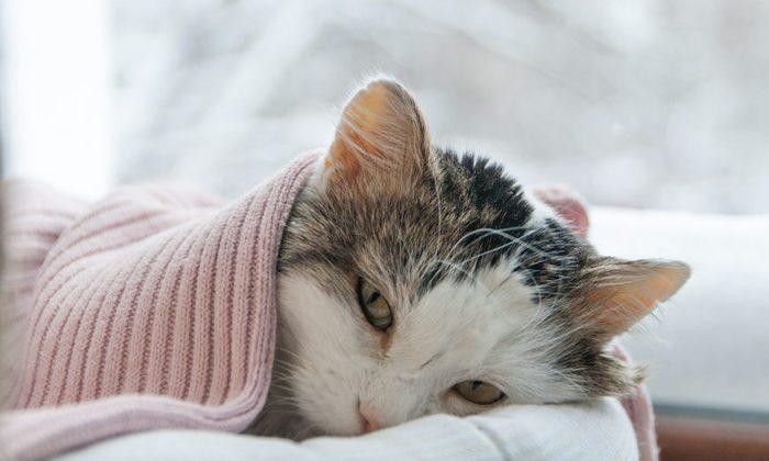cat lies on the window in winter