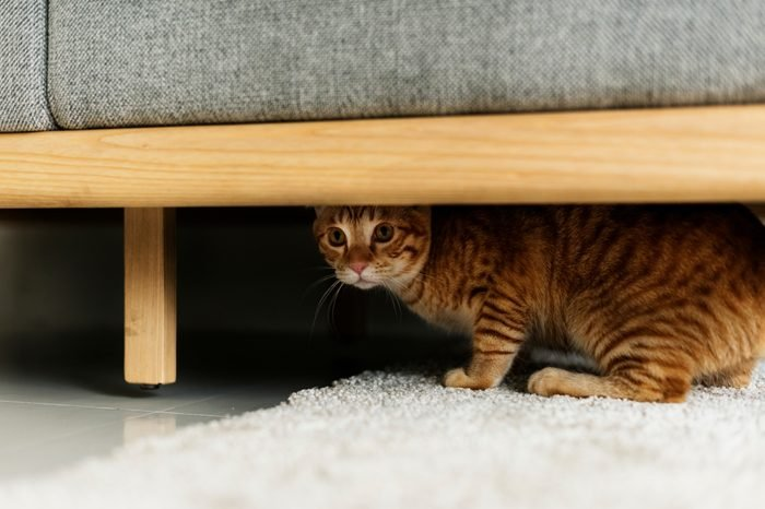 A cat hiding under a couch