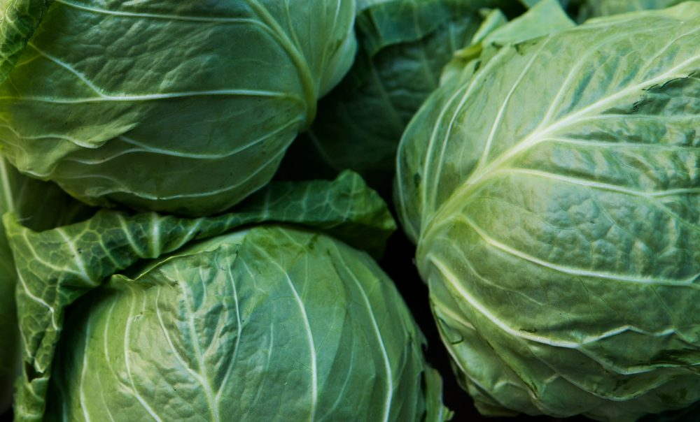 Cabbage background. Fresh cabbage from farm field. Close up macro view of green cabbages. Vegetarian food concept. Group of green cabbages in a market. Healthy concept.