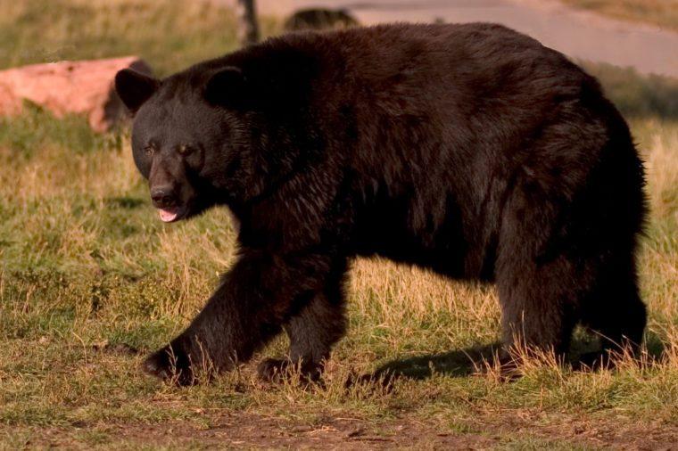 BearCountry00005