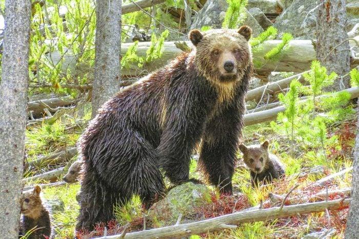 bear with babies