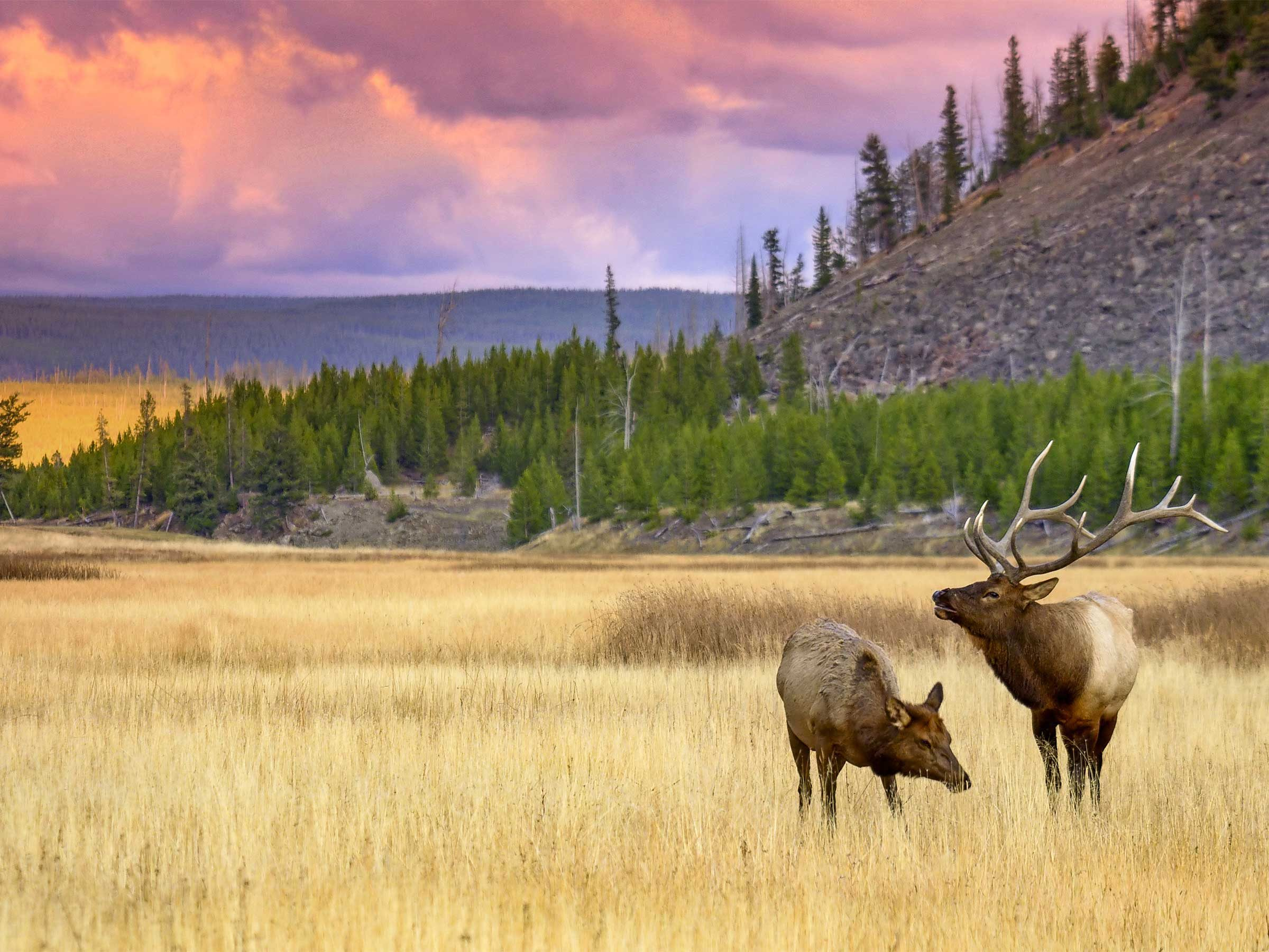 Amazing Wildlife Photos In Yellowstone National Park