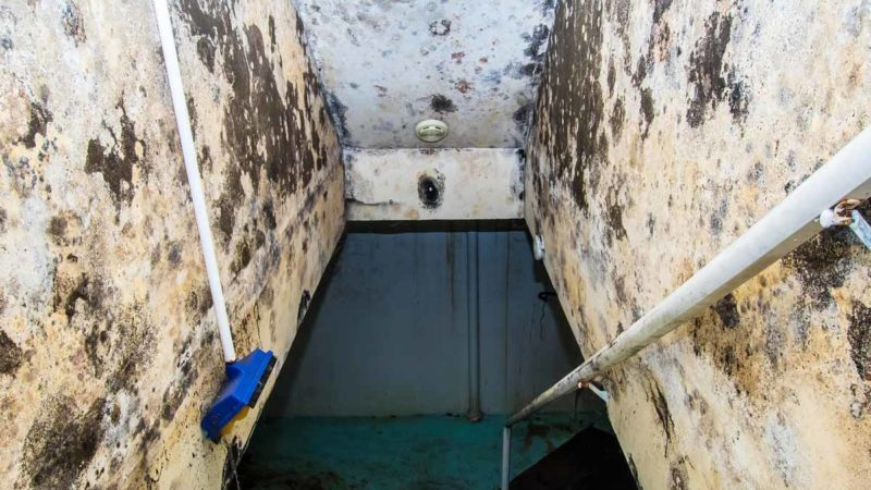 mildew and mold removal pro
