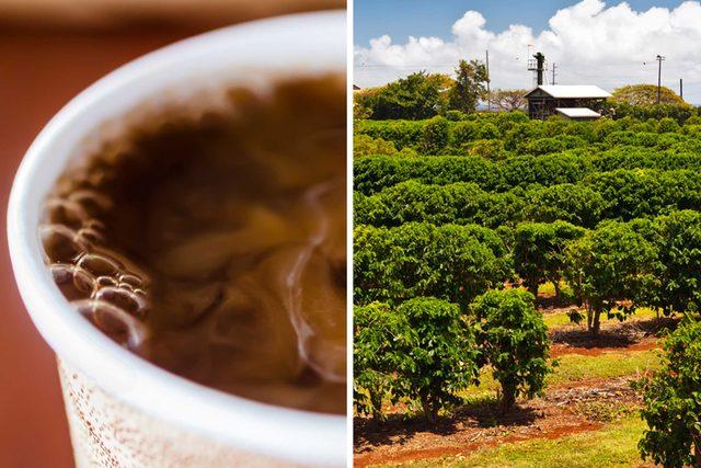 state coffee hawaii