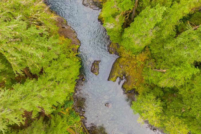 Aerial drone view of a wild river running through a forest
