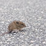 7 Cities That Are About to Be Infested with Mice